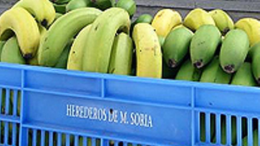 La caja de plátanos que Soria y su jefe de prensa llevaron a la radio pública canaria.