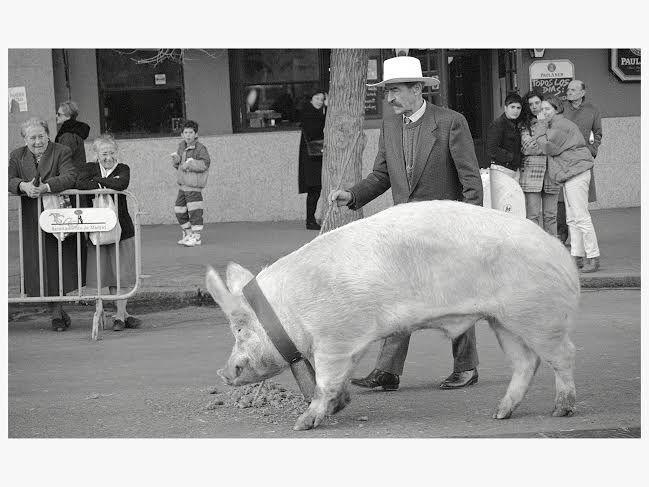Cerdo en la calle Barceló en la procesión de San Antón, 1994 | Foto: Pablo Linés
