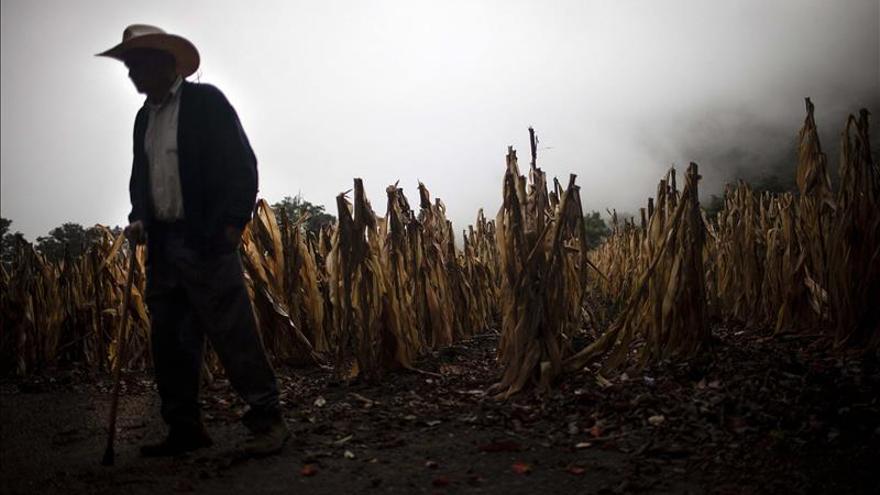 Corea del Sur ofrece ayuda a Guatemala y Honduras contra el cambio climático