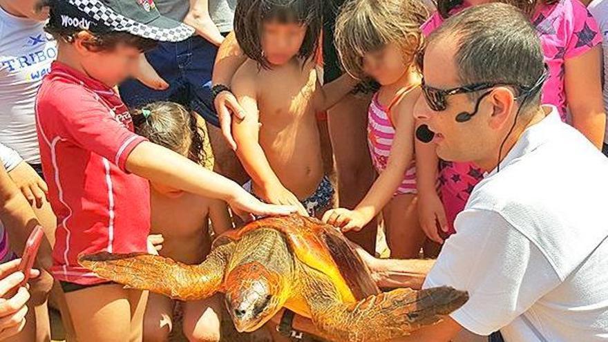 Suelta de tortugas / Fundación Neotrópico en Facebook