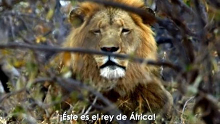 Frank Cuesta espanta a un león: 'Que no se mueva ni Dios'