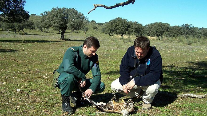 Revisión de un ave presuntamente envenenada. /M. Cardalliaget-Seo