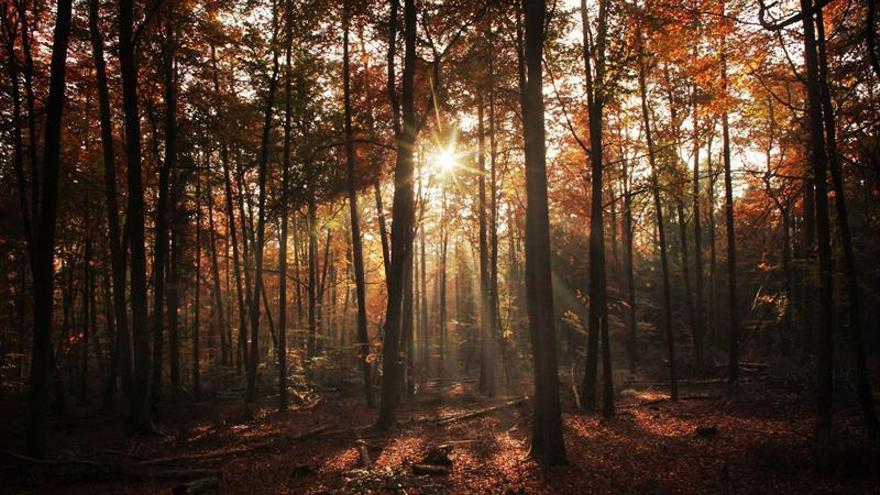 Investigadores estudian el vínculo entre los bosques y la salud de las personas