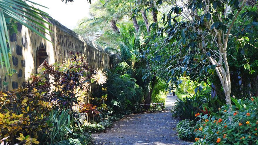 Un paseo por el bot nico for Jardin botanico de tenerife