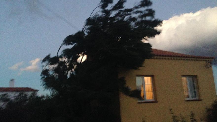 Imagen de un árbol azotado por el viento en la zona de Las Breñas.