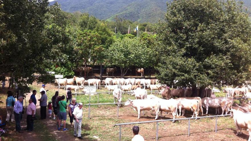 Este sábado se congregaron en San Isidro 226 cabezas de ganado. Foto: ÁNGEL ALONSO DE PAZ