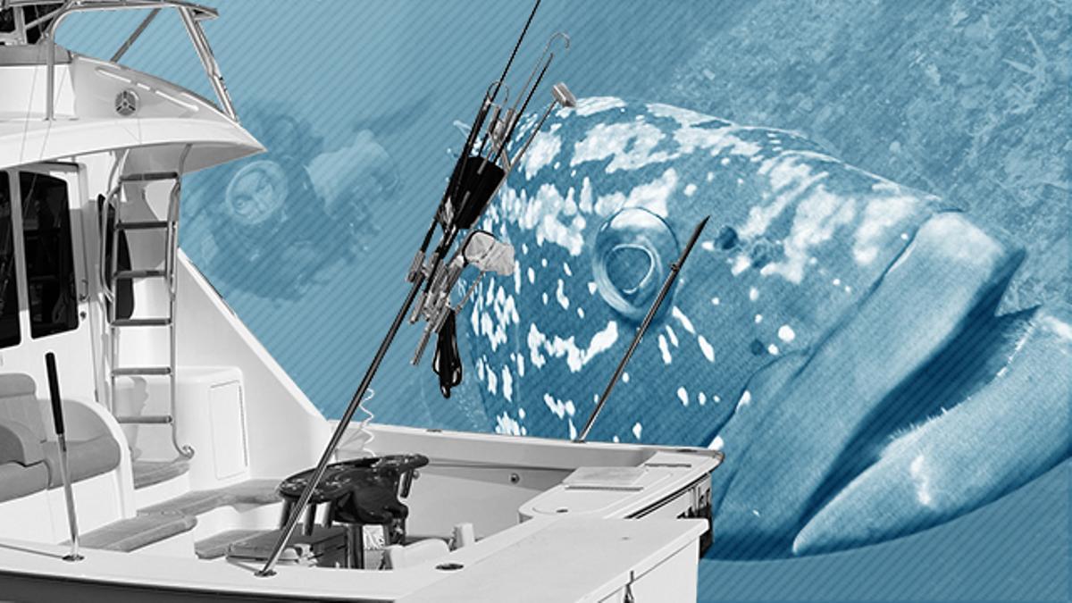 La pesca furtiva se enmascara con la recreativa.