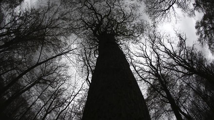 Ante el cambio climático, hay menos árboles nuevos pero los demás crecen más