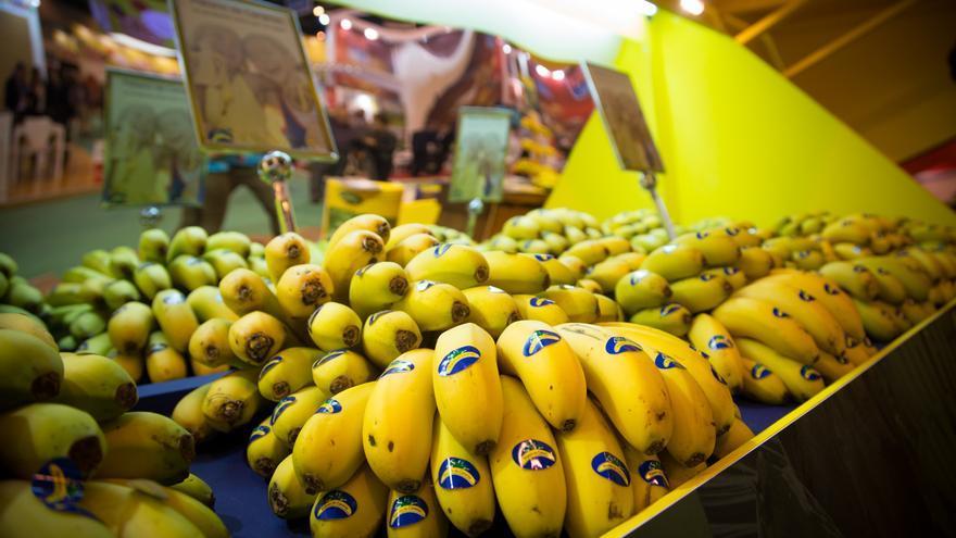 Expositor con plátano isleño en un supermercado