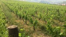 """Martínez Arroyo aboga por un """"cambio radical"""" en el sector del vino: disminuir la producción y apostar por calidad"""