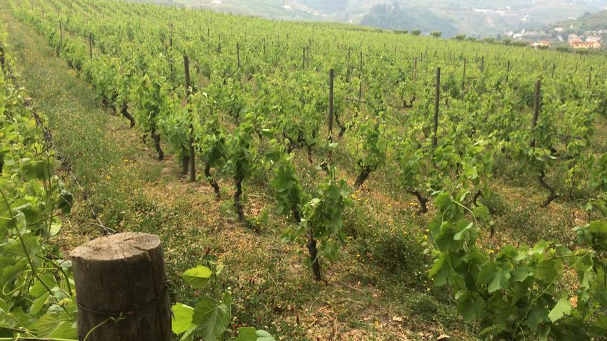 Vender kilos de uva o litros de vino: estrategias de adaptación al cambio climático