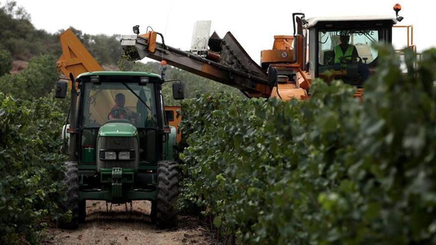 Codorníu abandona la producción para terceros y recortará cien empleos