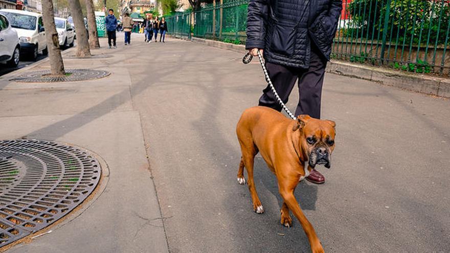Un hombre paseando a su perro