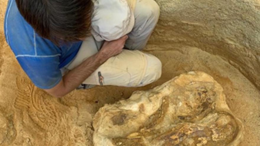 Vértebra cervical de un dinosaurio saurópodo