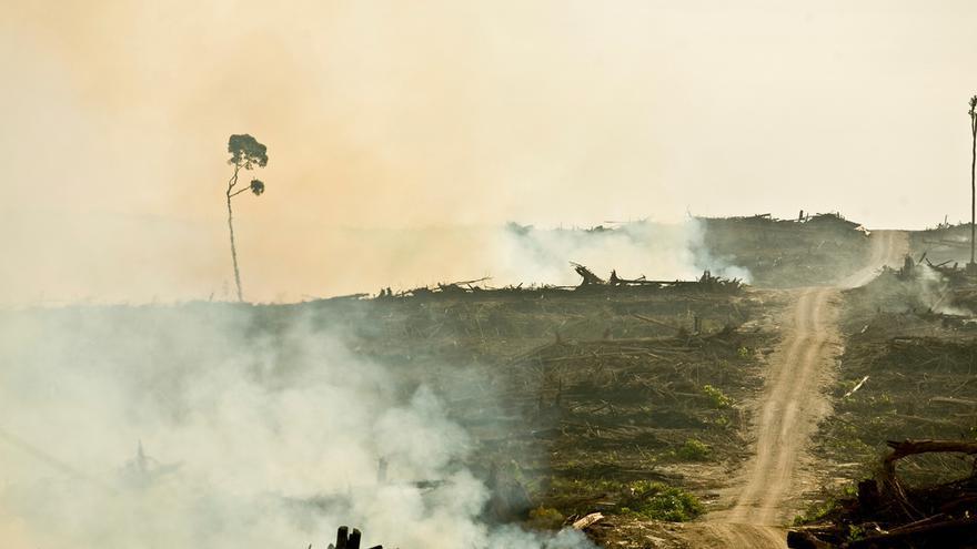 Alimentación, sabores, economía, conductas... - Página 10 Deforestacion-plantaciones-palma-Rainforest_EDIIMA20170403_0689_4