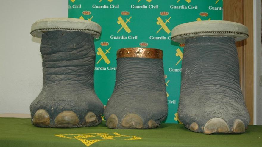 Patas de elefante incautadas por el Seprona
