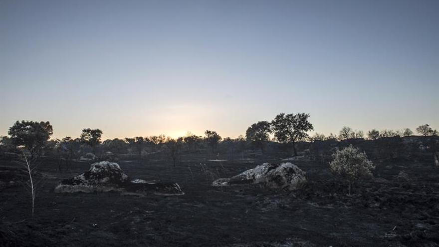 El incendio de Cáceres ha asolado más de mil hectáreas de pastos