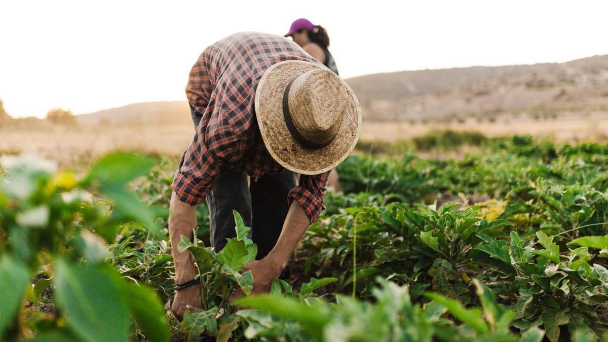Hombre trabajando en zonas rurales