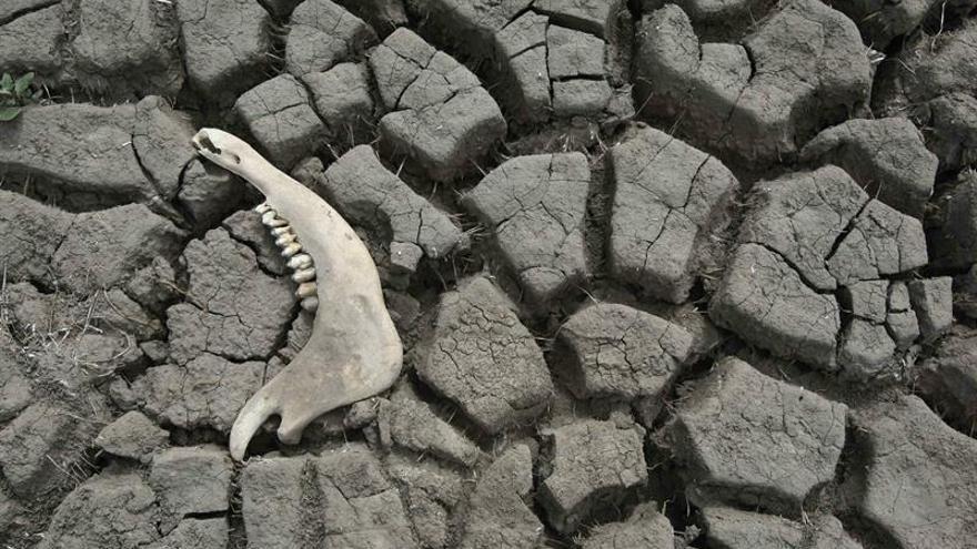Un 76 por ciento del territorio de Chile está afectado por la sequía, según Greenpeace