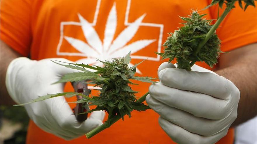 El consumo de cannabis y tranquilizantes creció con la crisis en España