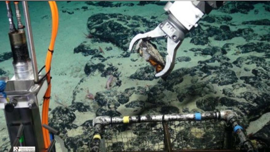 Imagen submarina de costras de ferromanganesa y fosforitas muestreadas en el monte submarino 'Tropic'. (IGME)