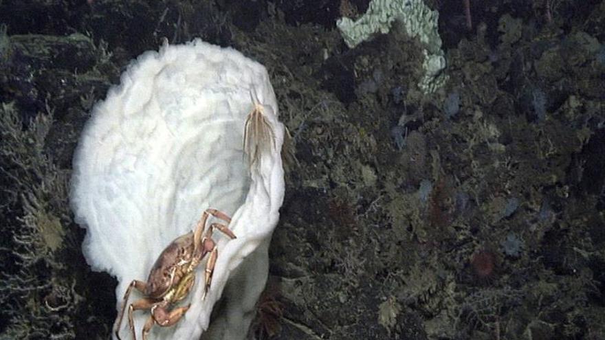 Filman numerosos volcanes submarinos en Lanzarote: ¿un Timanfaya sumergido?