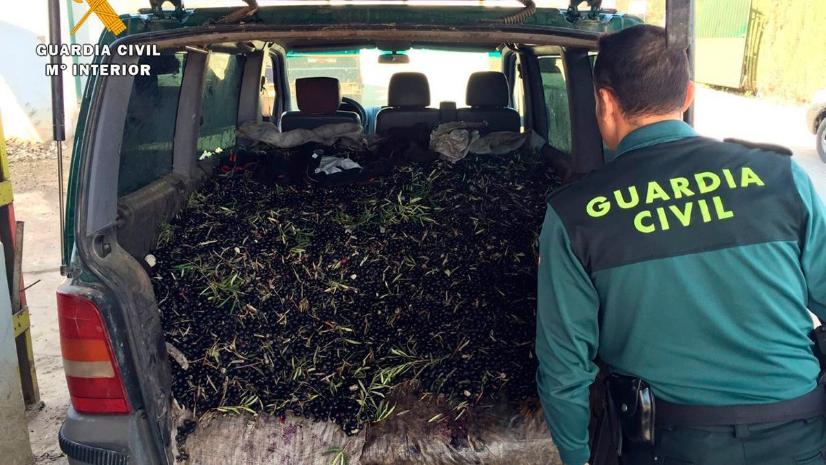 Un vehículo lleno de aceitunas interceptado por la Guardia Civil.