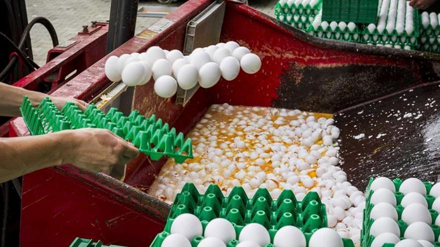 Ministros belgas comparecerán en el Parlamento por huevos contaminados