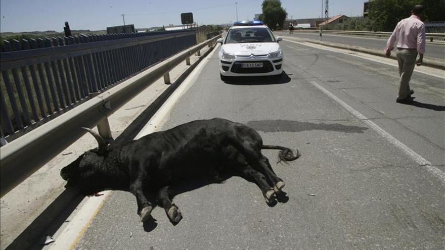 El joven intervenido tras escaparse un toro en Talavera evoluciona bien