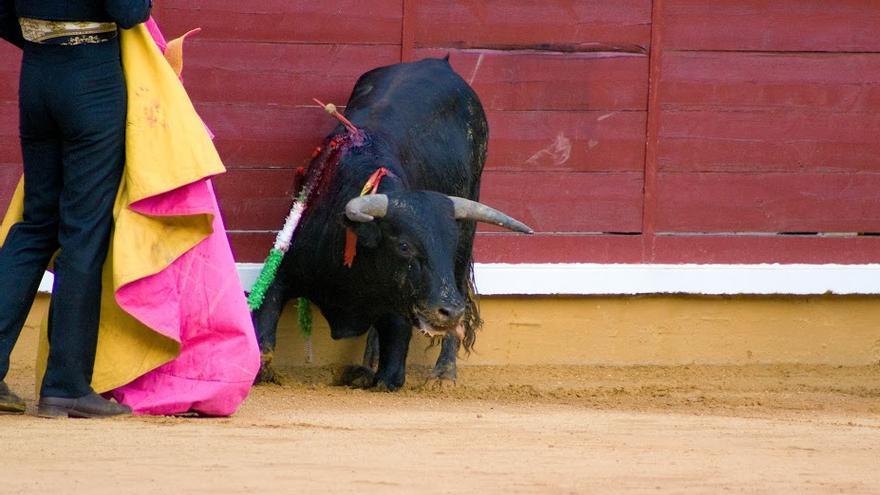 Los alumnos taurinos pierden la empatía por el sufrimiento animal. Foto: AVATMA