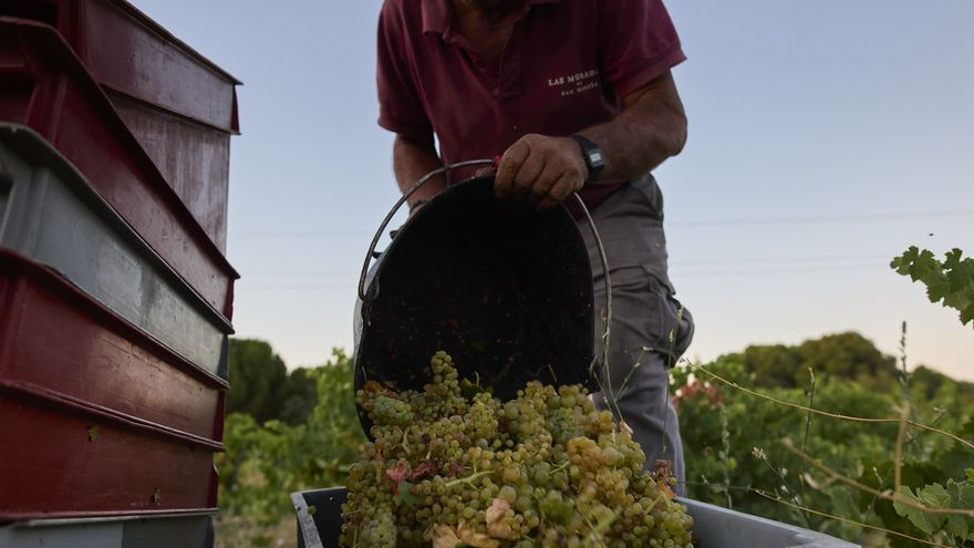 """El portavoz de vino de Cooperativas Agroalimentarias considera que """"hay buenas perspectivas de mercado durante esta campaña"""""""