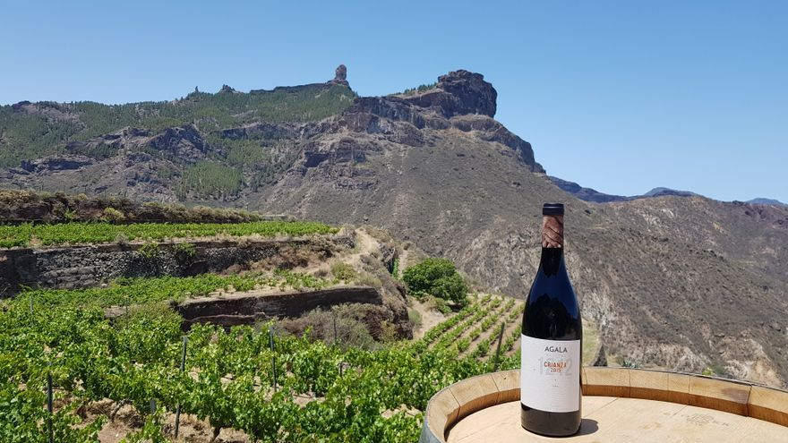 Las faldas del Bentayga producen un vino que 'vale oro'