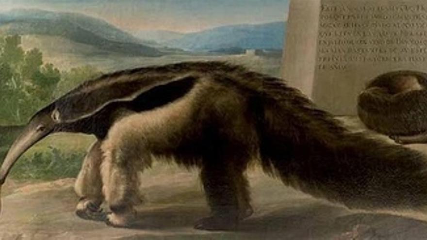 Osa Hormiguera Presuntamente Pintada Por Goya
