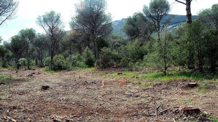 La Dehesa Boyal tras la tala, en una imagen de la Plataforma Ambiental de Puertollano