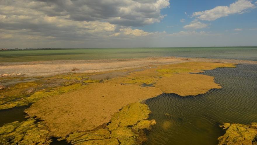 """ANSE y WWF advierten de una nueva """"sopa verde"""" en el mar Menor por su grave deterioro"""