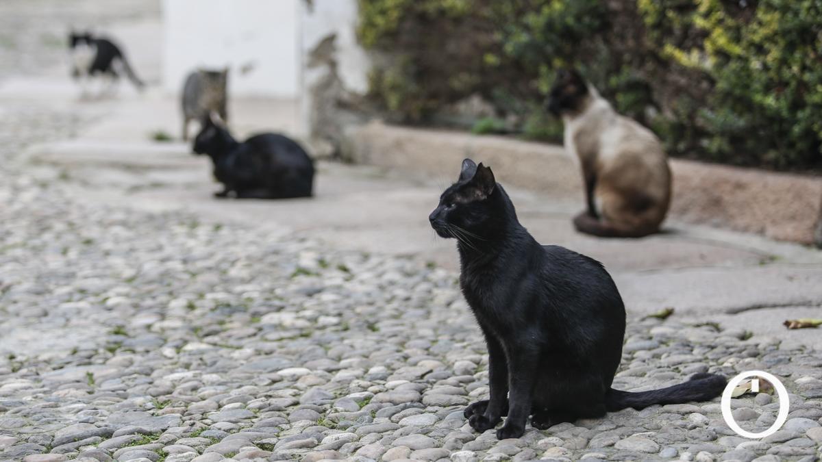 Gatos de una colonia felina.