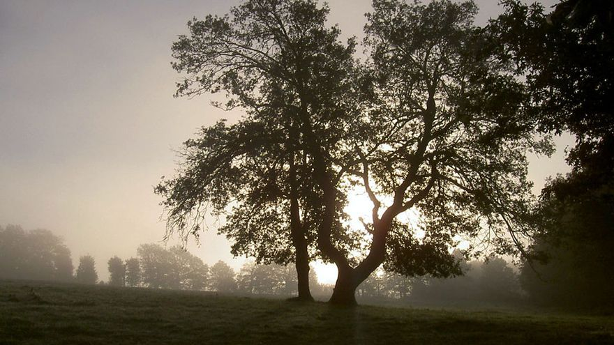 Bosque de Broceliande / Ernestine Nestor vía Flickr (CC)