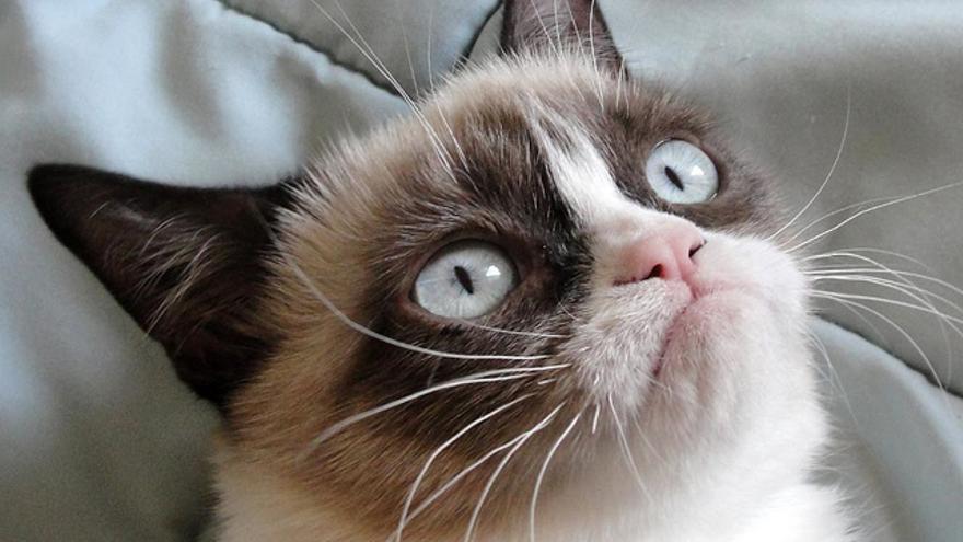 'Grumpy cat' se ha convertido en una de las gatas más famosas de internet