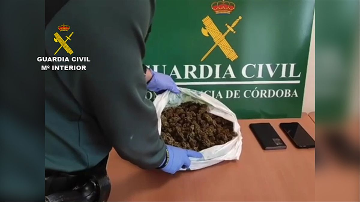 Marihuana incautada en Montilla