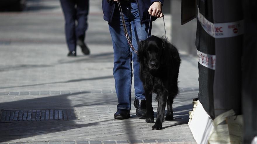 Aprobada por unanimidad la ley de acceso al entorno de personas con discapacidad con perros de asistencia
