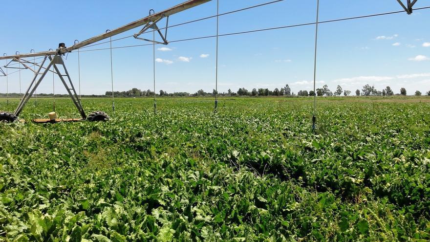 Agricultura cerrará 2017 con la convocatoria de 232,9 millones para regadíos, caminos y proyectos de desarrollo rural