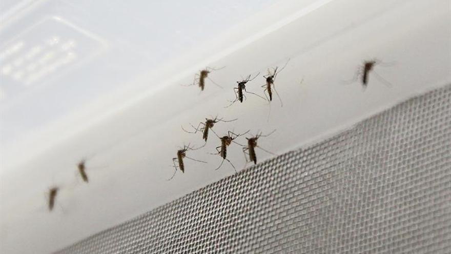 Ascienden a 167 los casos de zika en España y de ellos 22 son embarazadas