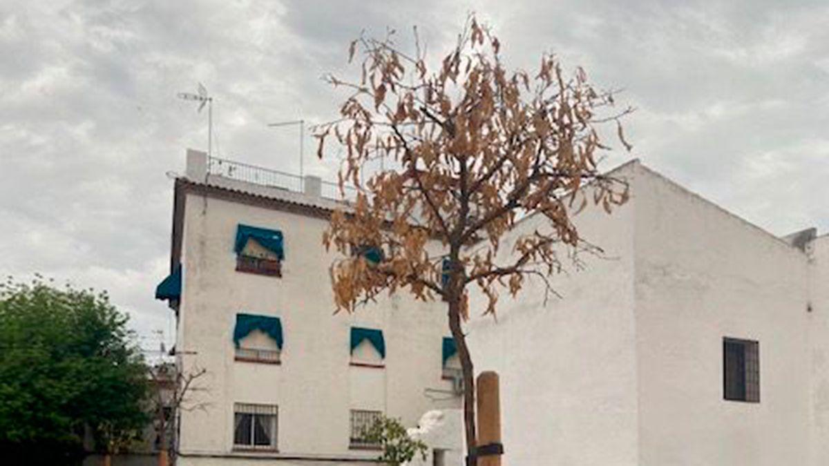 Árbol seco en el solar del antiguo Cine Andalucía.