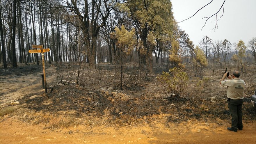Un agent forestal treballa sobre el terreny cremat en l'incendi de Llutxent