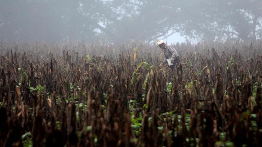 El impacto de la sequía en la agricultura obliga a los hondureños a desplazarse