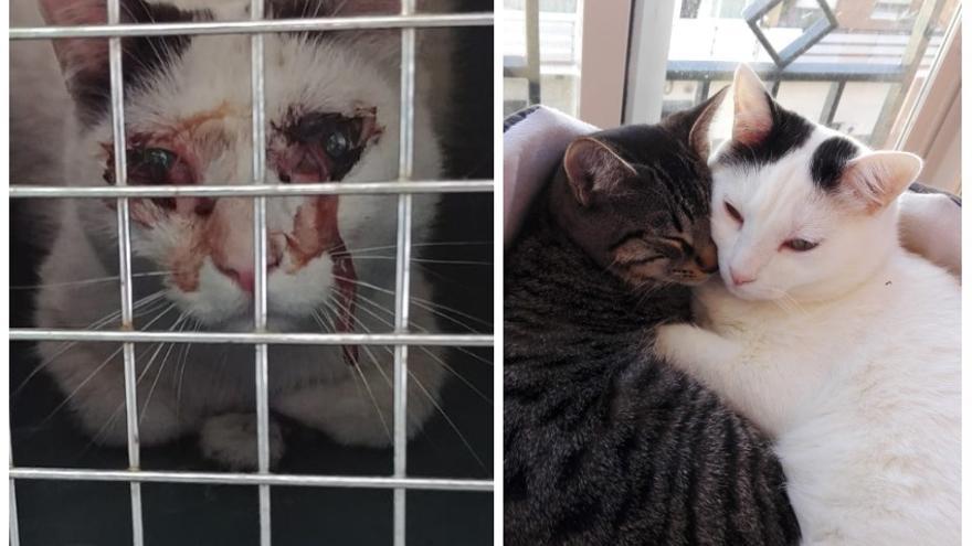 Sito fue rescatado en Madrid después de sufrir un brutal golpe en la cabeza. Ahora vive feliz junto a sus hermanos de acogida a la espera de adopción.