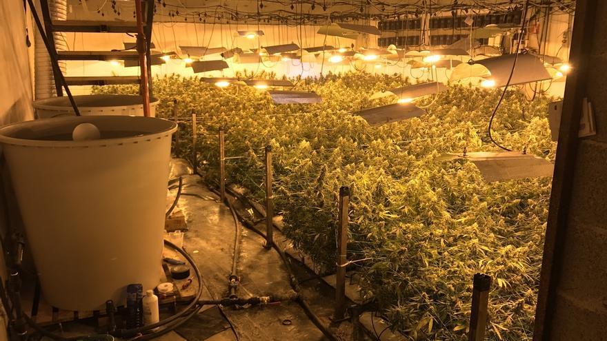 Localizan 1.950 plantas de marihuana en un pabellón de Usurbil