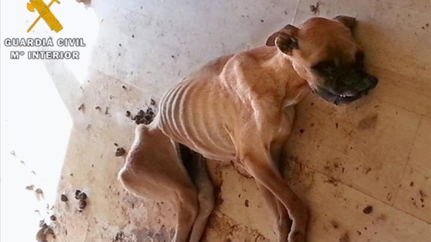 Dos detenidos acusados de dejar morir a una perra por deshidratación