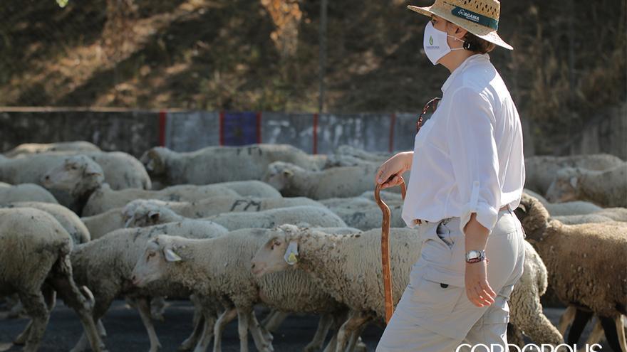 Paso de un rebaño de ovejas por Córdoba | JUAN HUERTAS