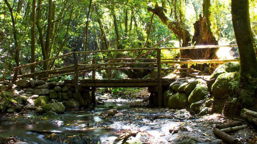 Arroyo del Bosque del Cedro, una de las postales más recurrentes de la isla de La Gomera. VIAJAR AHORA